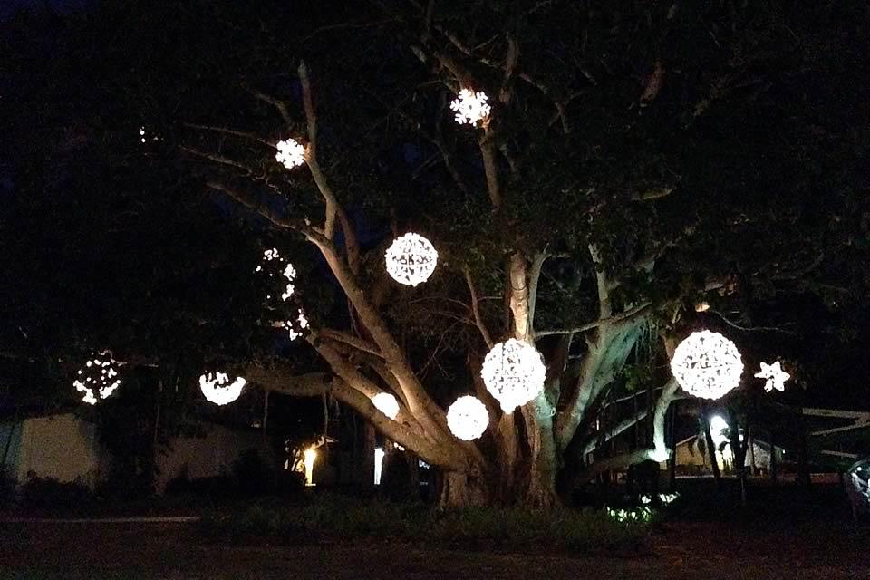 outdoor tree lighting ideas naura homes